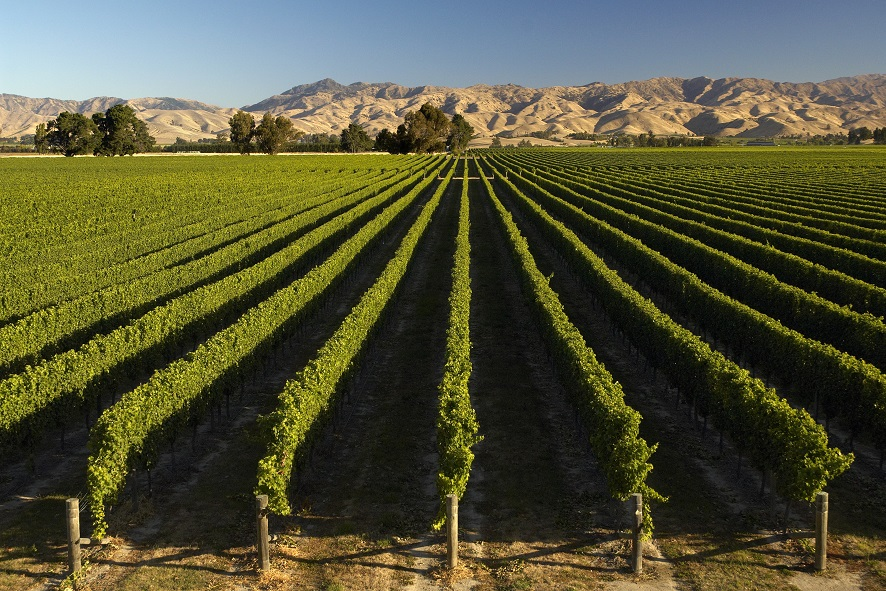 Carbon management in the wine industry
