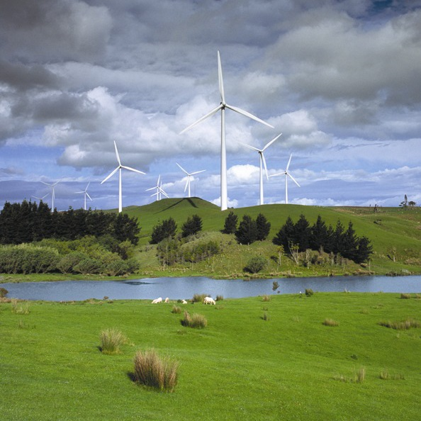Sheep on a windfarm