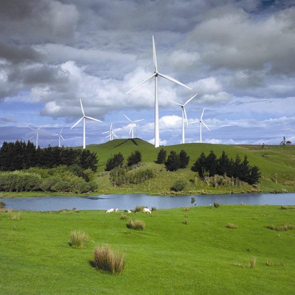 Sheep on a windfarm